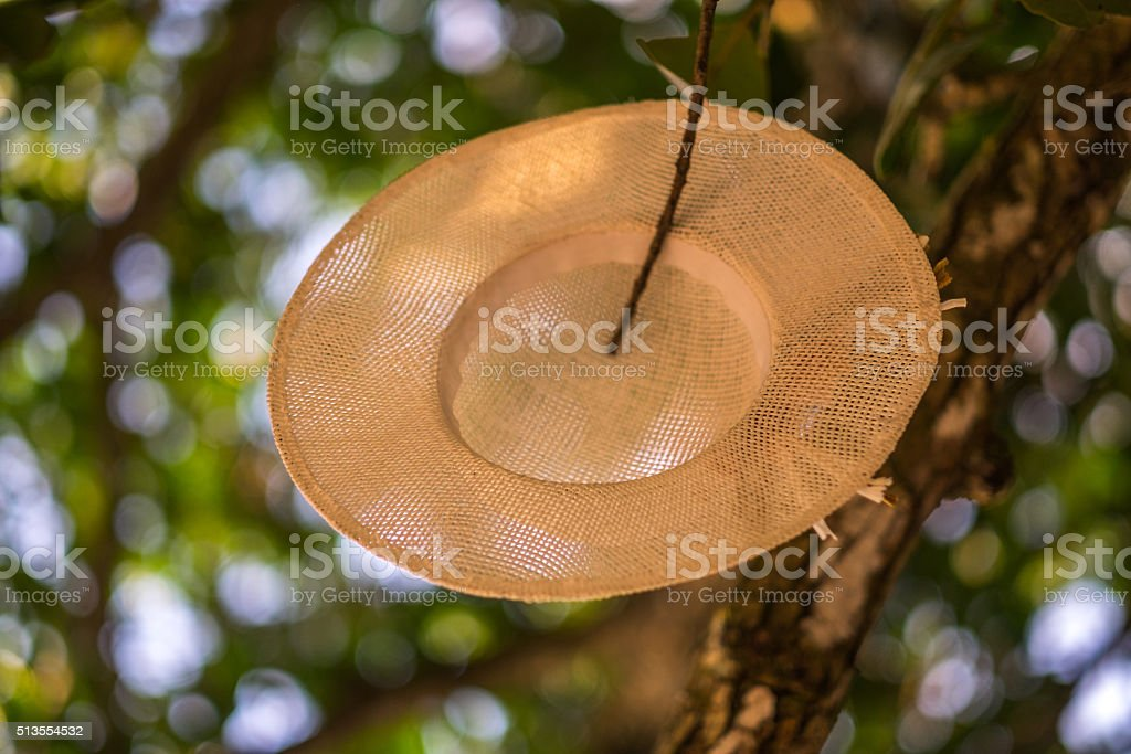 sun hat hang over the tree stock photo
