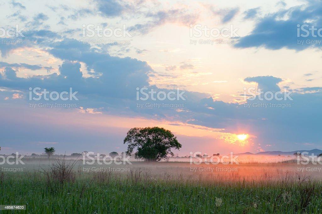 Sun illuminating morning fog stock photo