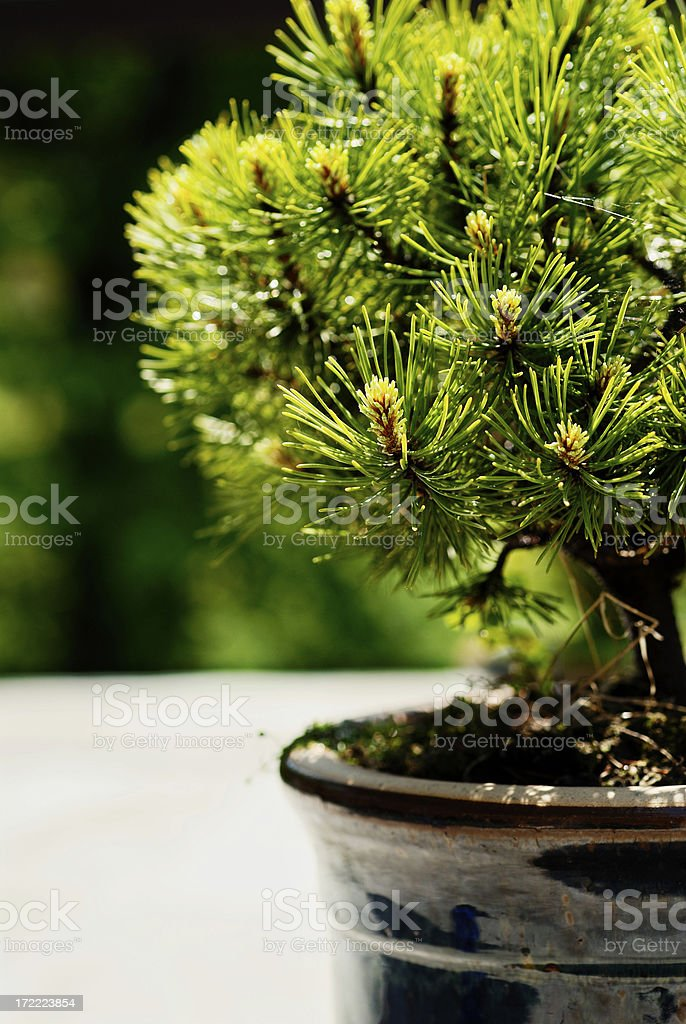 Sun in a garden royalty-free stock photo