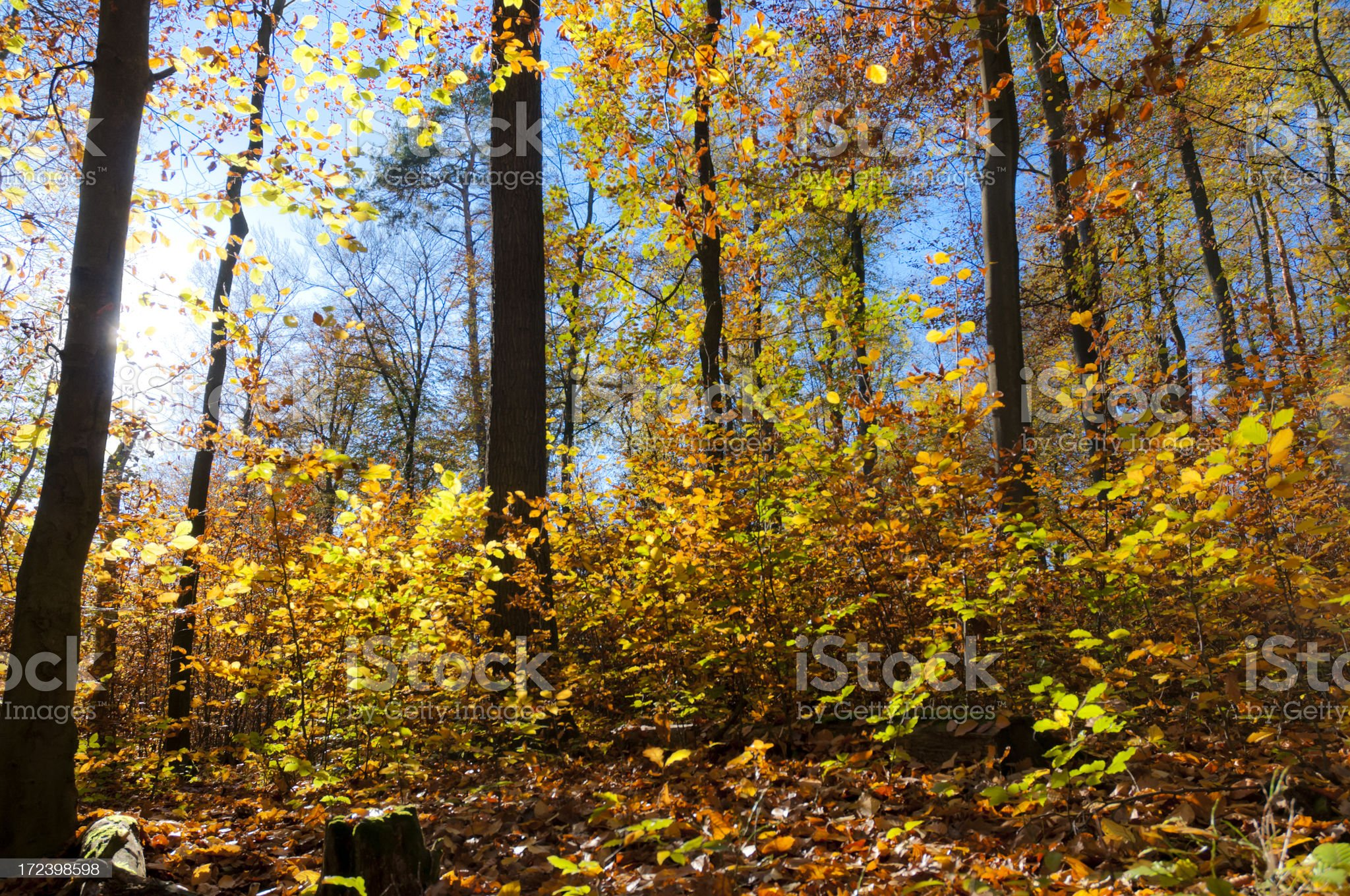 Sun in autumn forest royalty-free stock photo