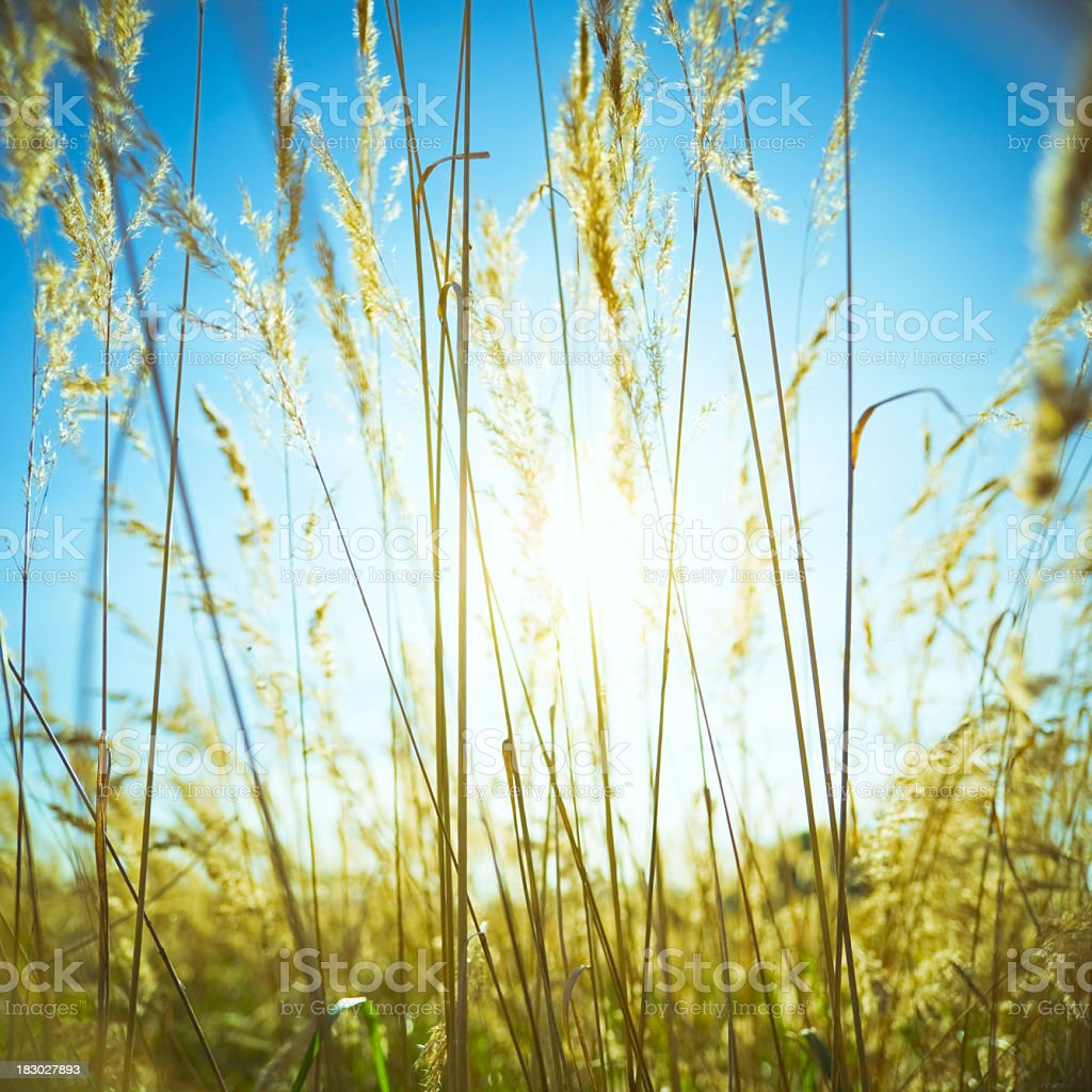 Sun in grass stock photo
