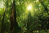 Sun in Pluvial Rainforest