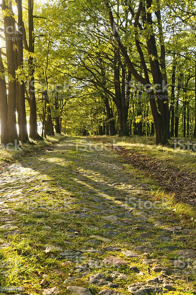 sun in the forest royalty-free stock photo
