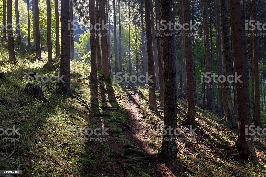 Sonne im Bergwald stock photo