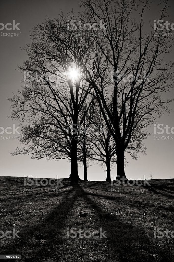 Sun in Tree royalty-free stock photo