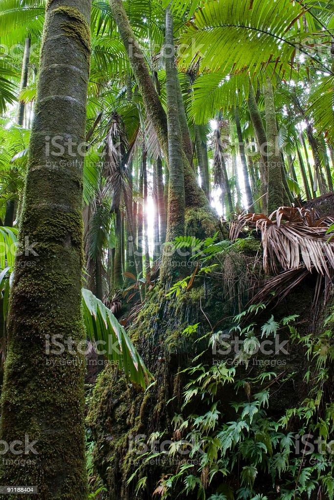 Sun into the Jungle stock photo