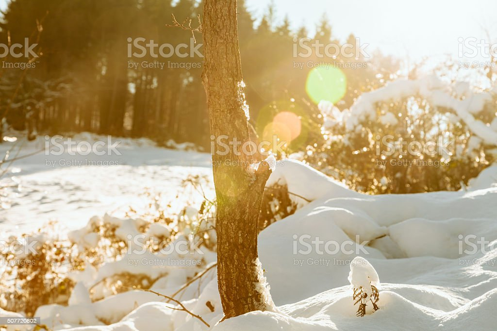 Sun is rising in a snowcapped forest stock photo