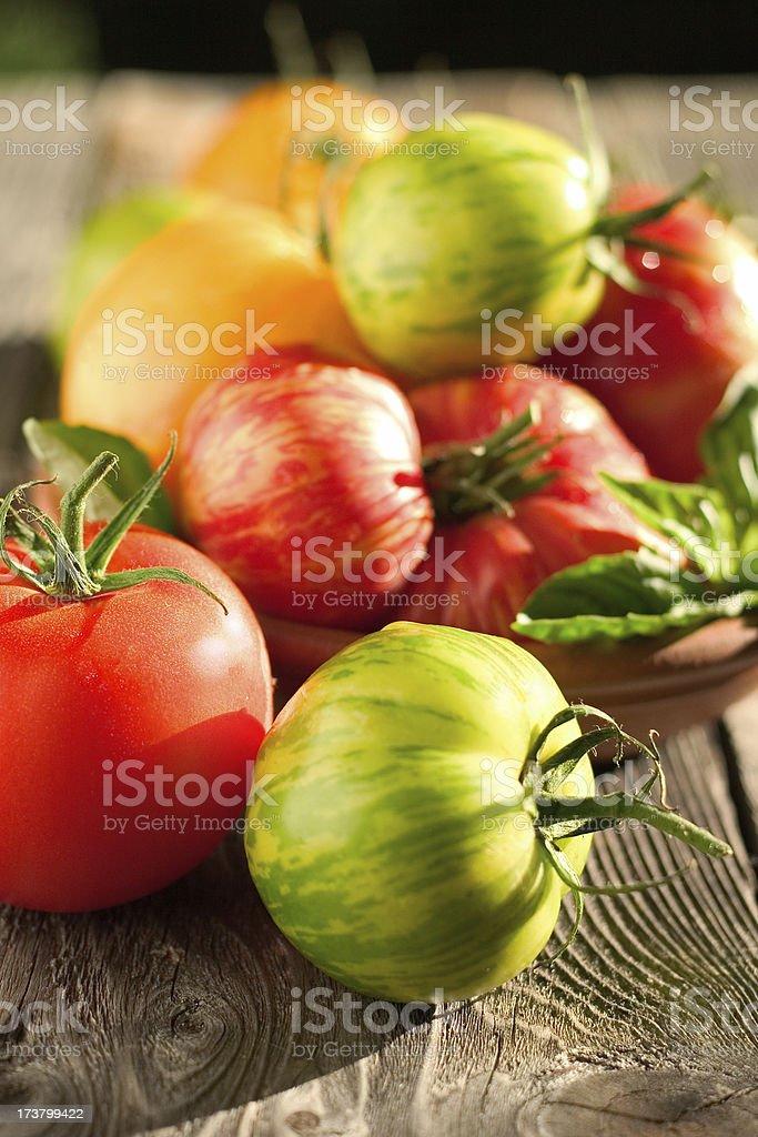 Sun Kissed Tomatoes stock photo