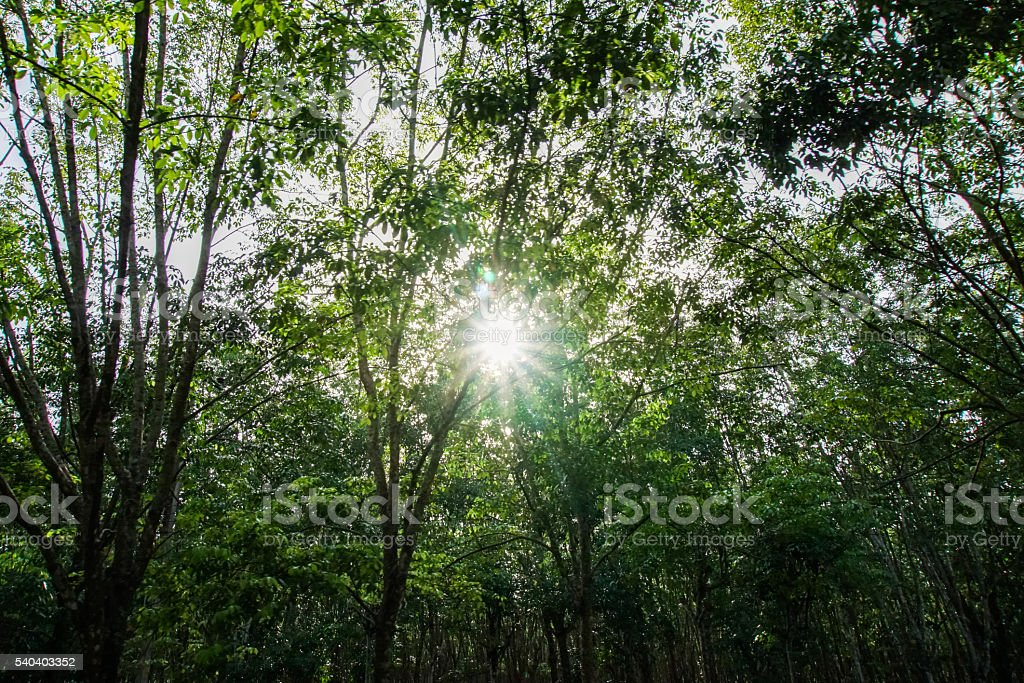 Sun light in a forest. stock photo