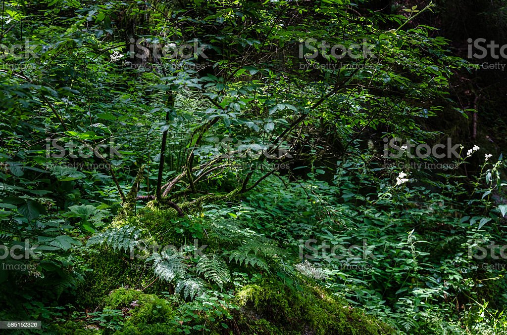 Sun light in a humid corner of the Black wood stock photo