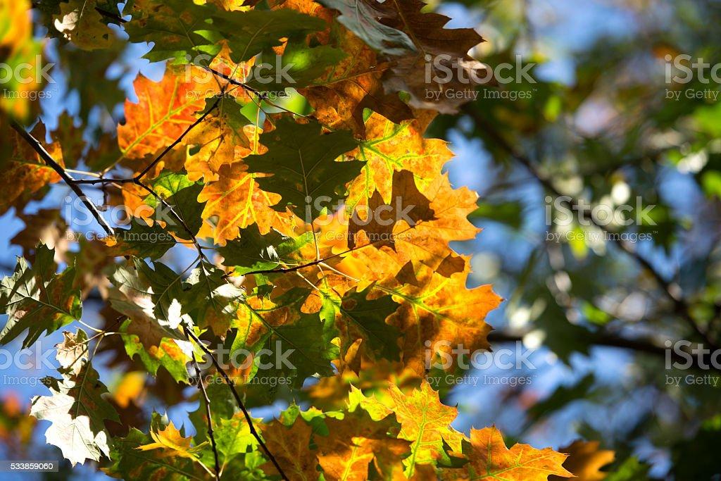 Sun light on Autumn leaves stock photo