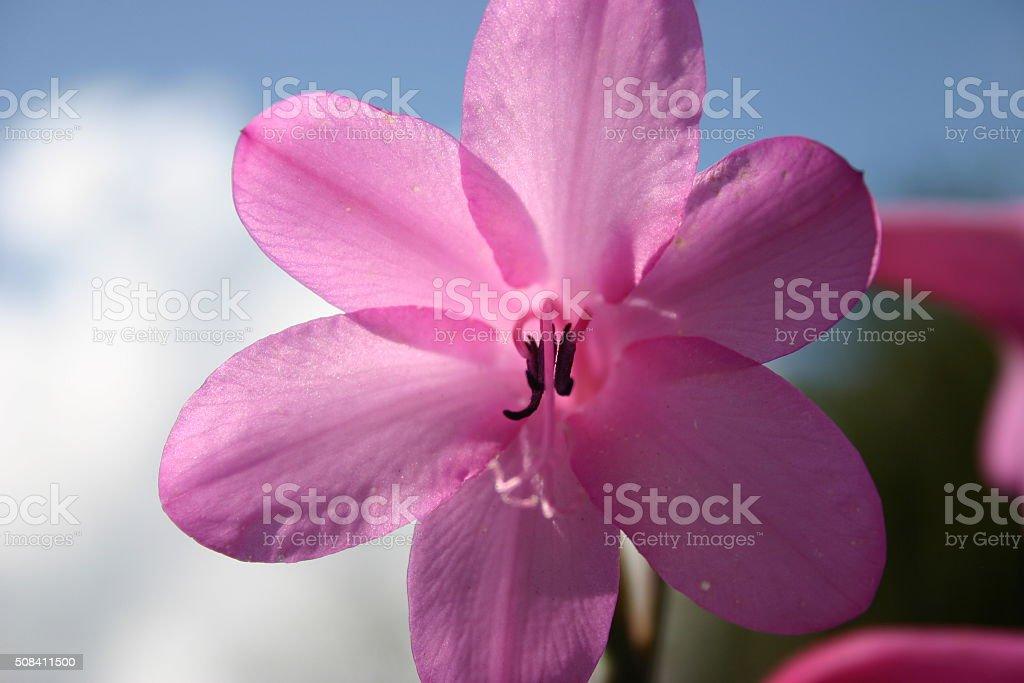 Sun lit flower stock photo