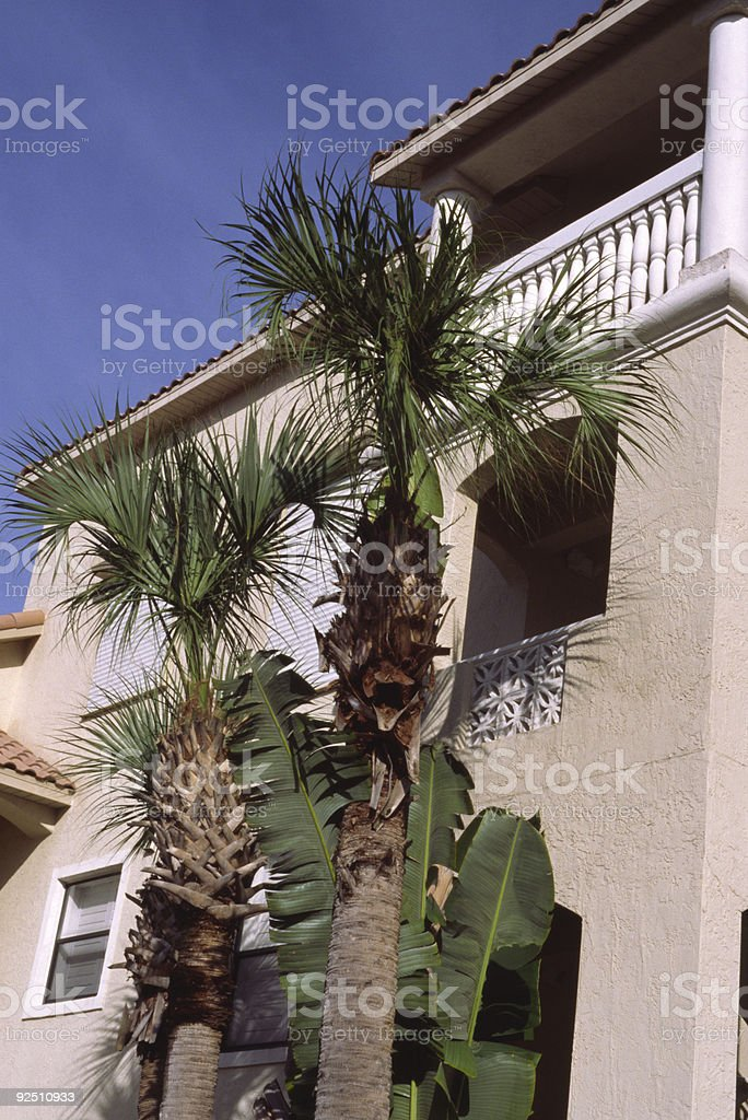 Sun lit wall with palms royalty-free stock photo