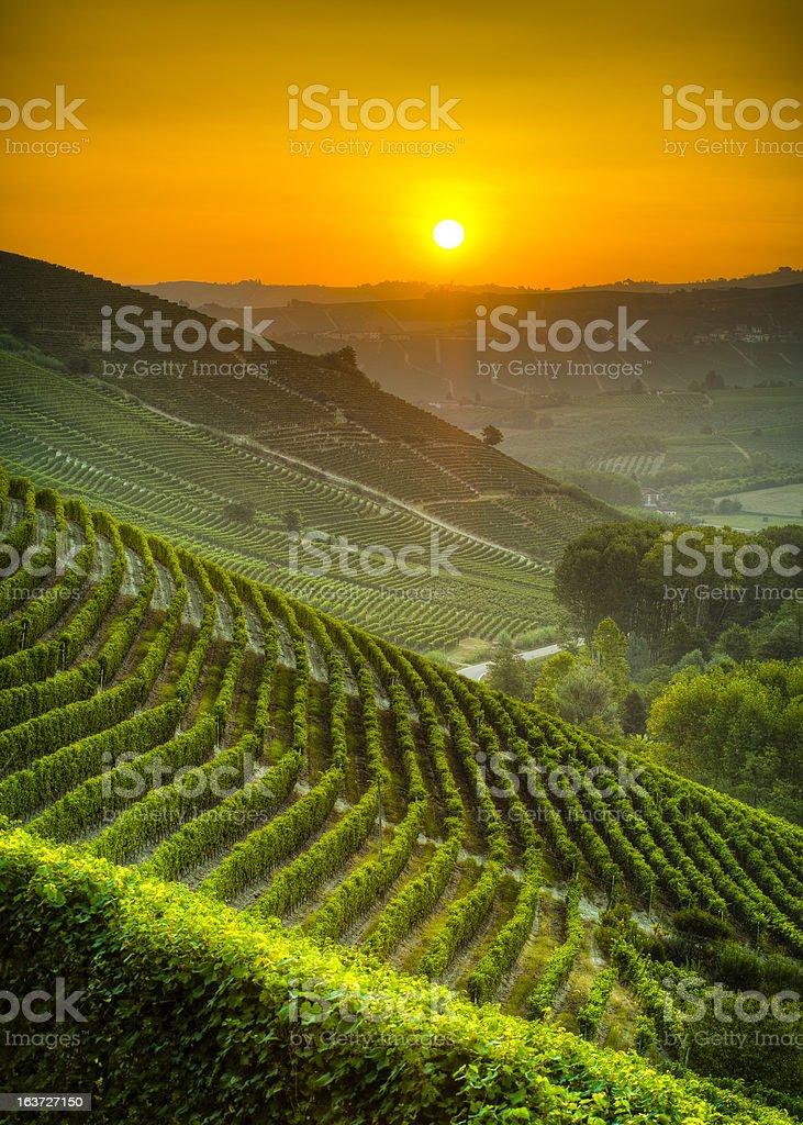 Sun on the vineyards stock photo