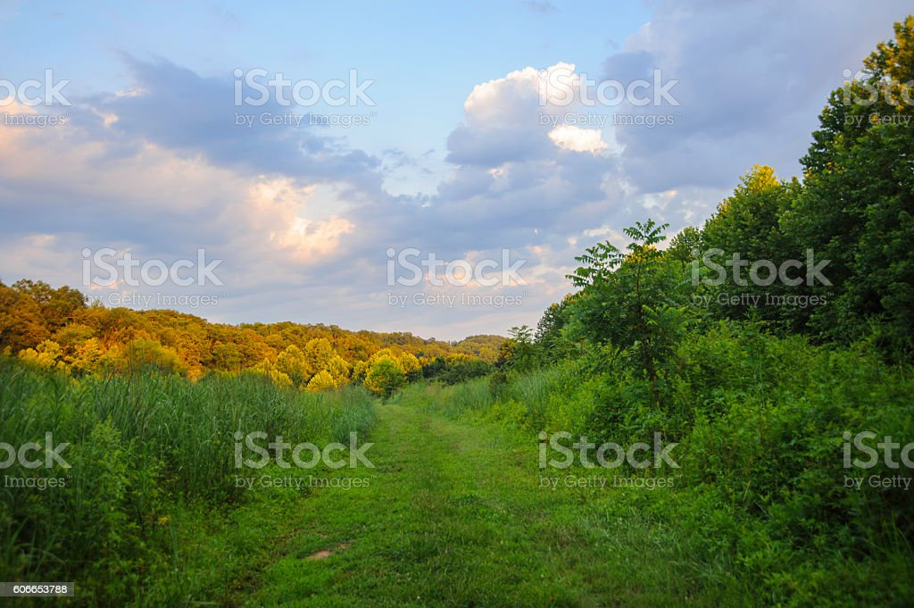 Sun on Trees Under a Beautiful Sky stock photo