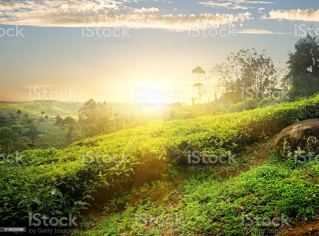 Sun over Nuwara Eliya stock photo
