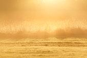 Sun overhead Grasses
