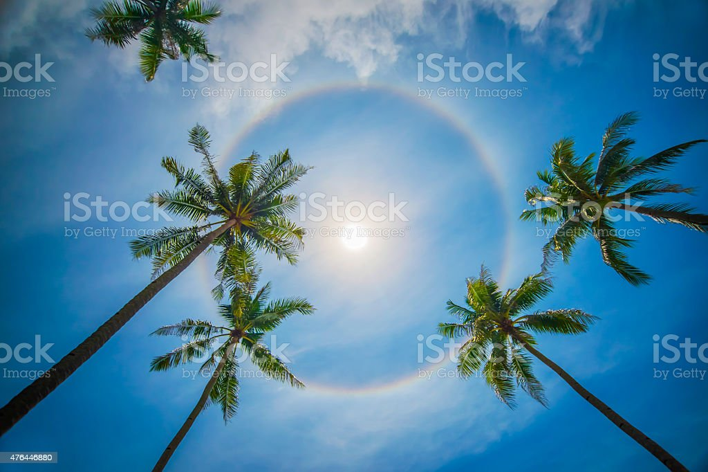 Sun rainbow circular halo phenomenon with palm trees stock photo