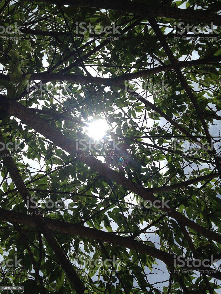 sun ray pass свет на зеленые листья и пышные Кадрирование Стоковые фото Стоковая фотография