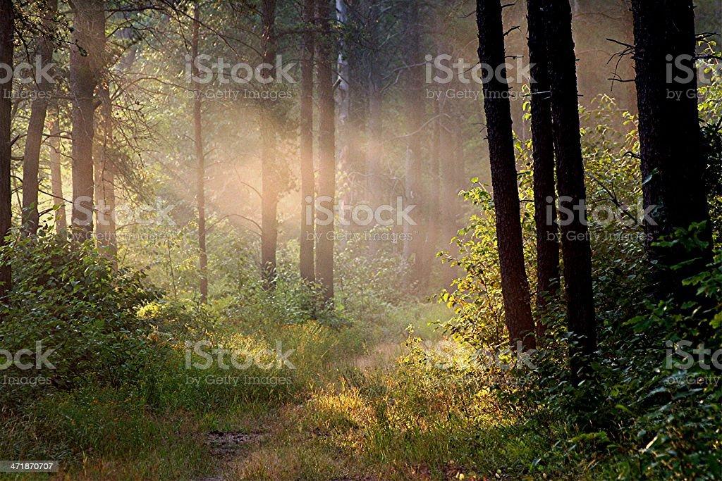 Sun Ray Showers stock photo