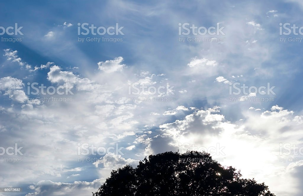 Sun Rays and Tree royalty-free stock photo