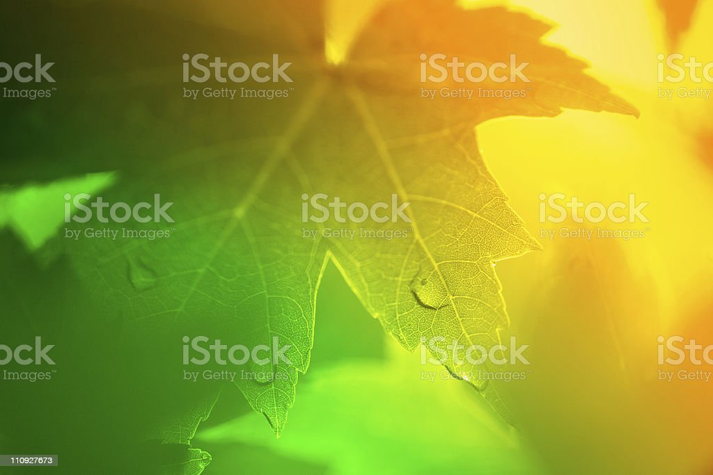 Sun rays coming through leaves stock photo