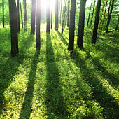 Sun rays  in a forest.