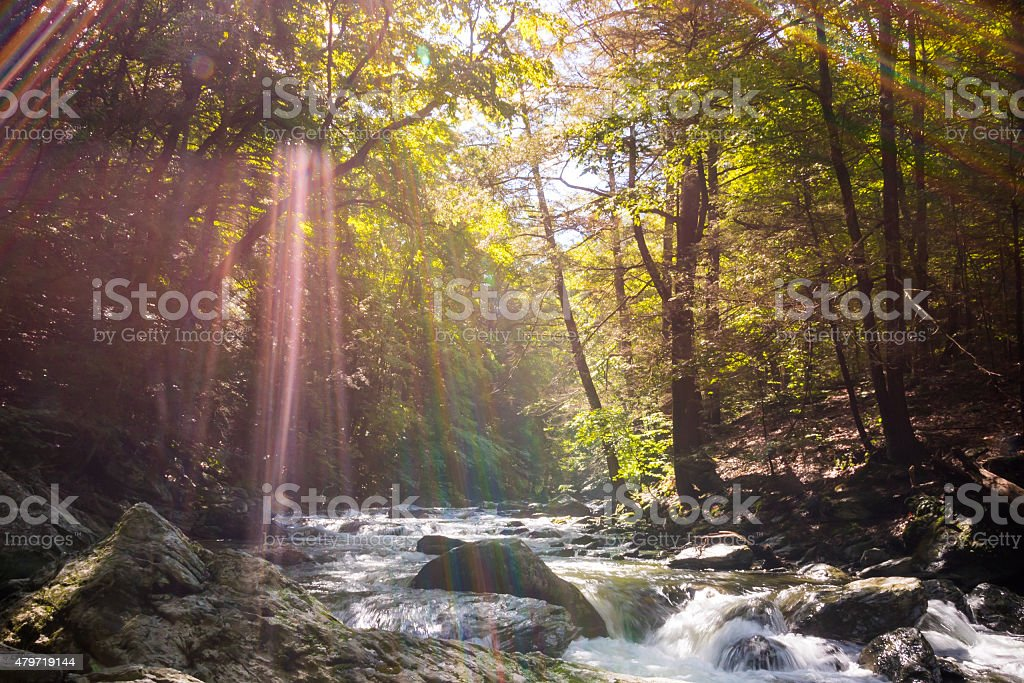 Sun Rays Pass through Forest and Rolling Creek stock photo