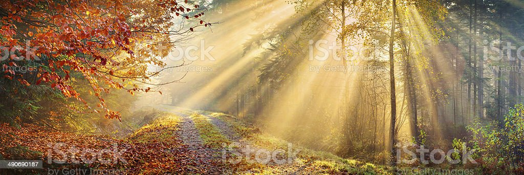 Sun Rays Penetrating Autumn Forest - XXXL 40 Mpix Panorama stock photo