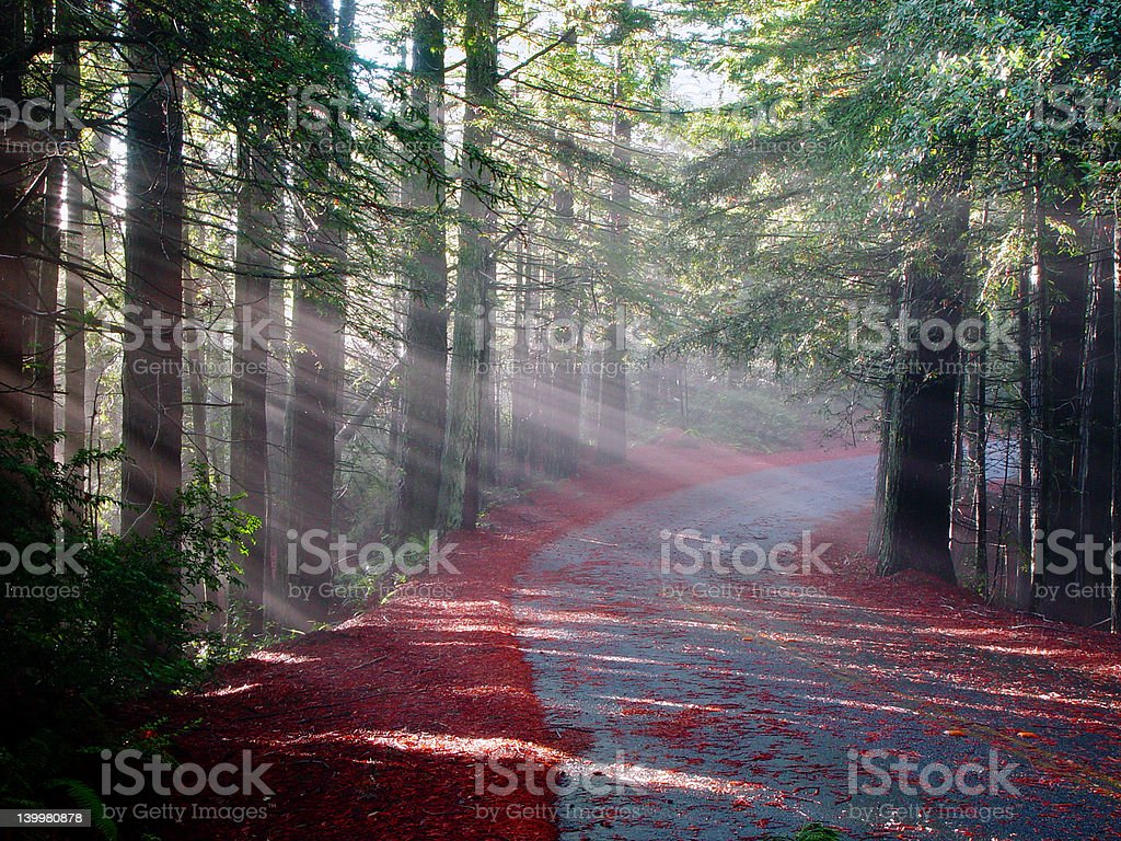 Sun Rays Road stock photo