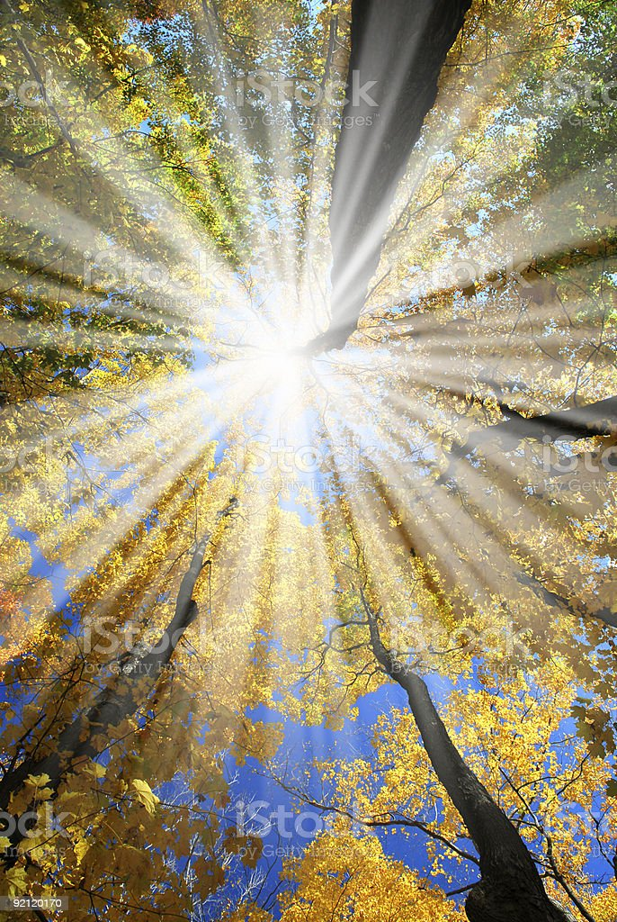 Sun rays shining down from autumn trees in woods  royalty-free stock photo