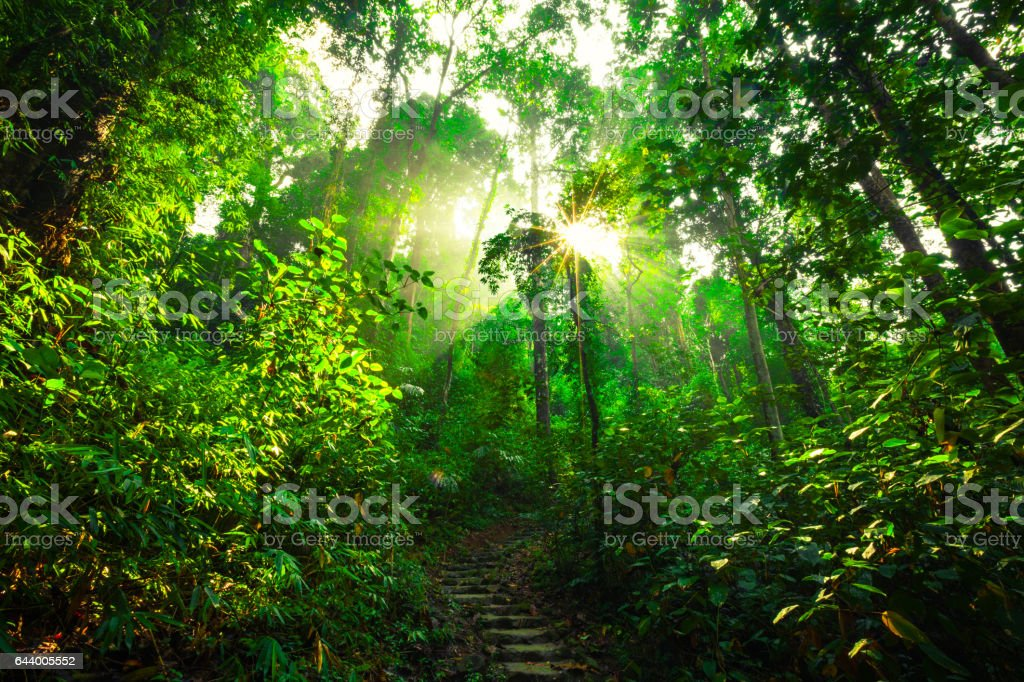 Sun rays shining through trees stock photo