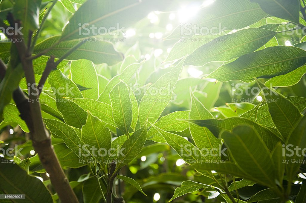 Sun rays through tree stock photo