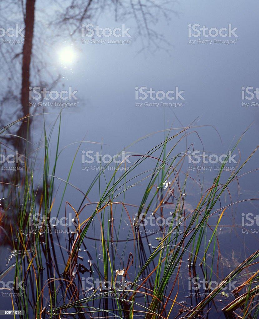 Sun reflecting in lake. stock photo