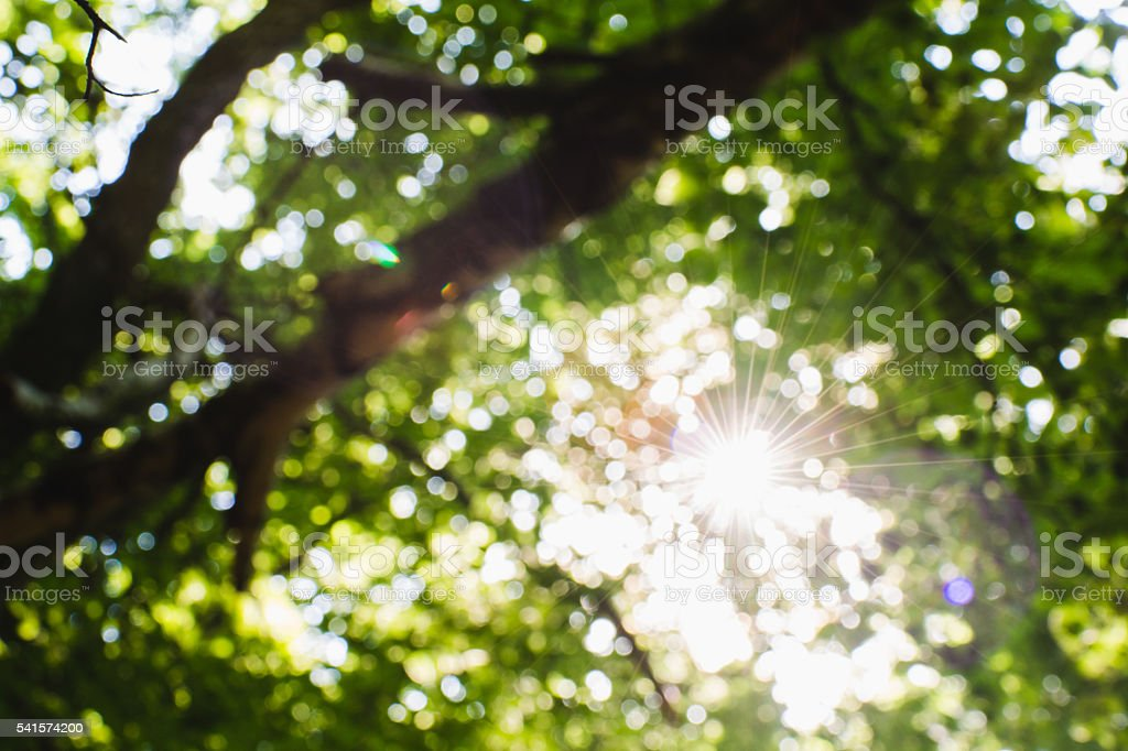 sun reflection in lens stock photo