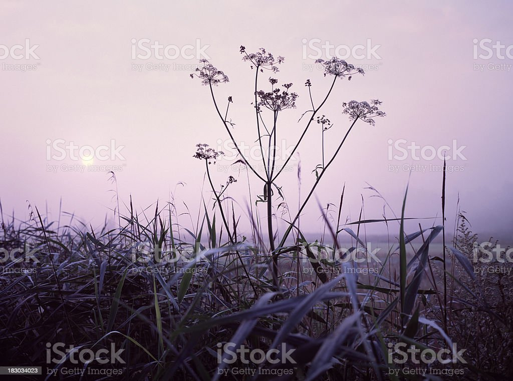 Sun rising at nature reserve in The Netherlands. stock photo