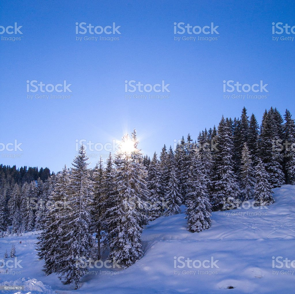 Sun rising over snow covered pine tress in Morzine, France stock photo