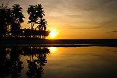 Sun set behind coconut trees