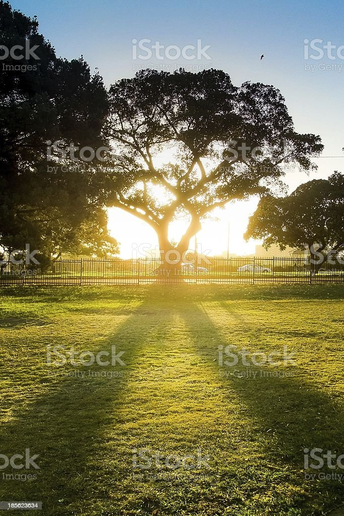 Sun set behind the beautiful tree royalty-free stock photo
