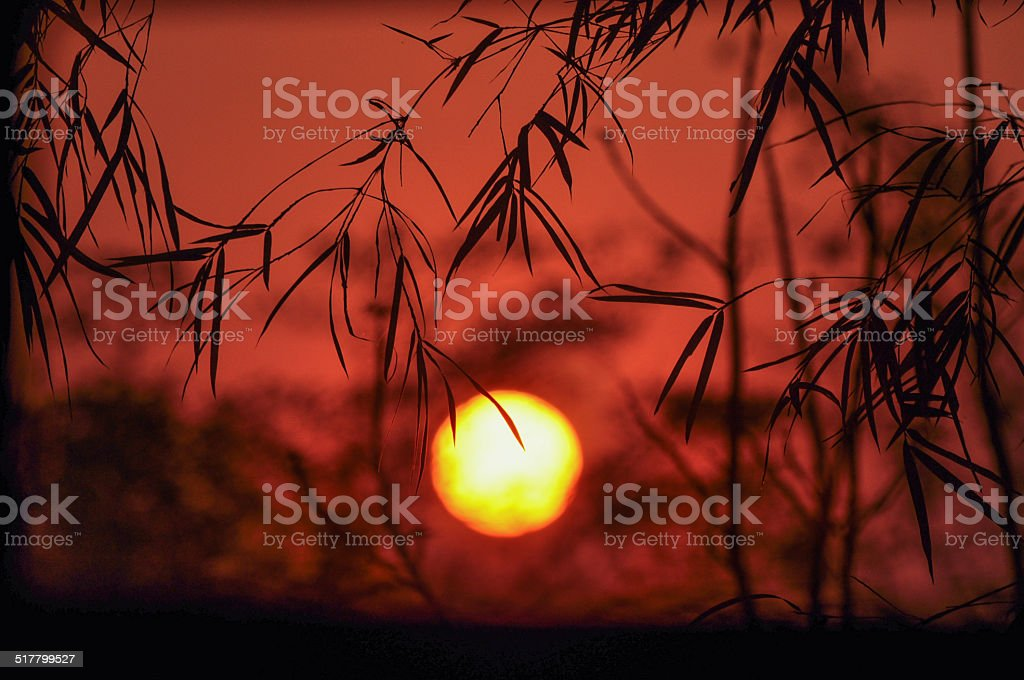 sun set with bamboo leaf background stock photo