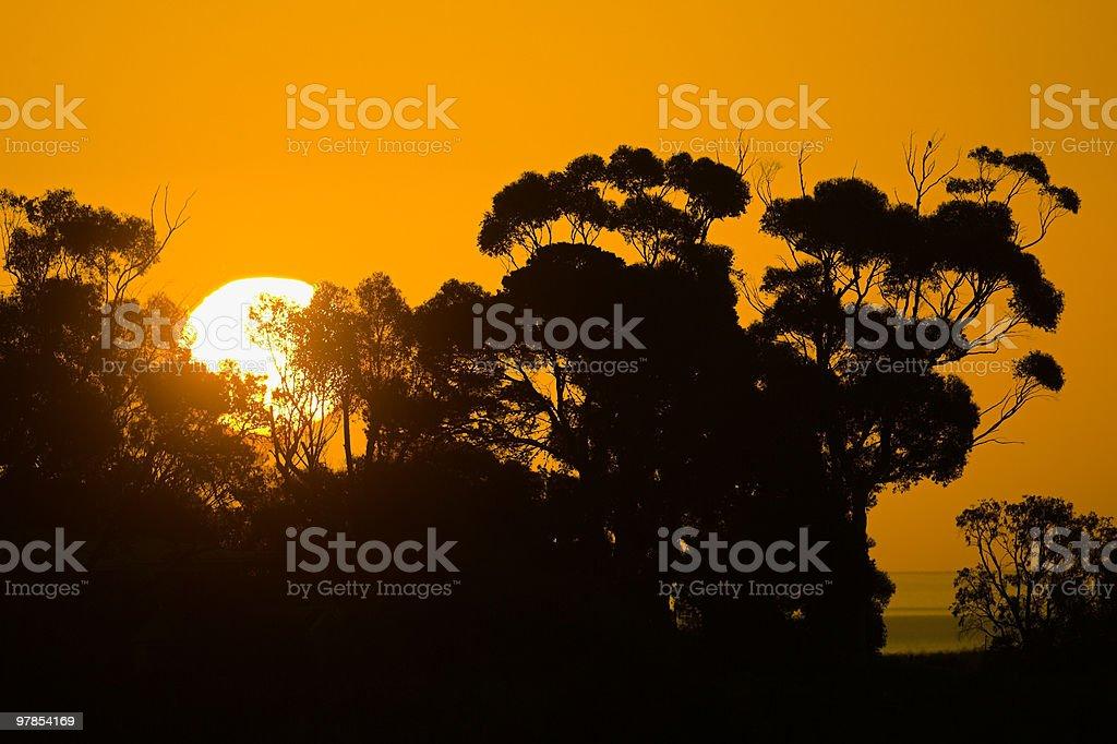 Sun Setting behind Gum Trees royalty-free stock photo