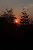 Sun setting between trees