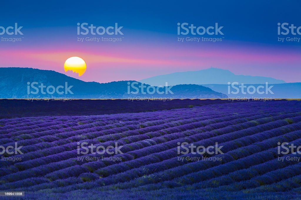 Sun setting over lavender field in Provence, France stock photo