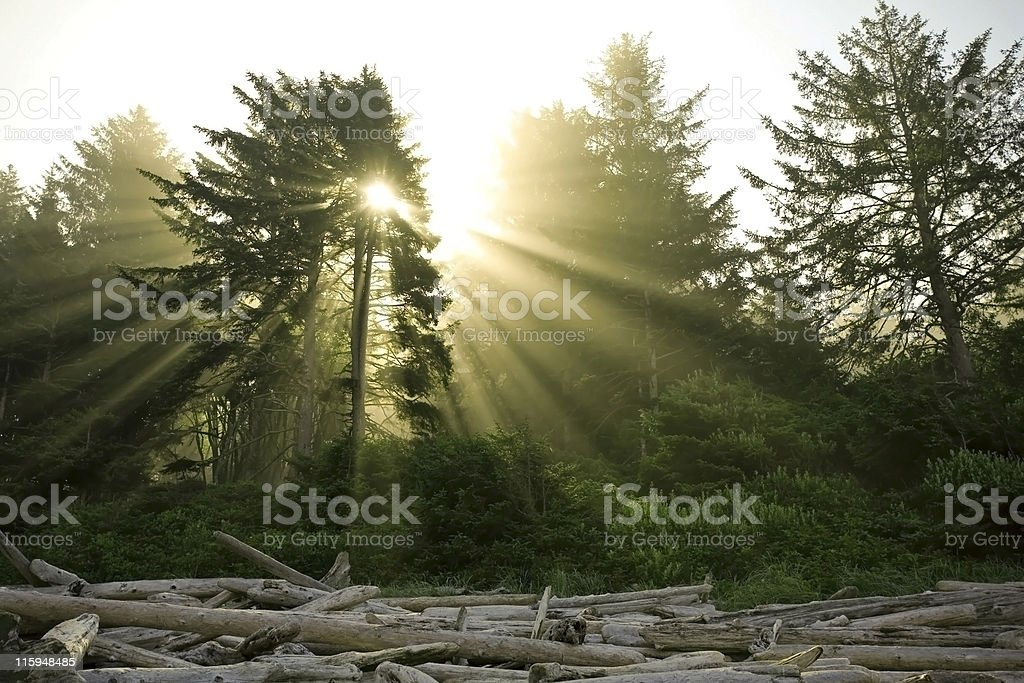 Sun shines through green branches and falls on dead logs royalty-free stock photo