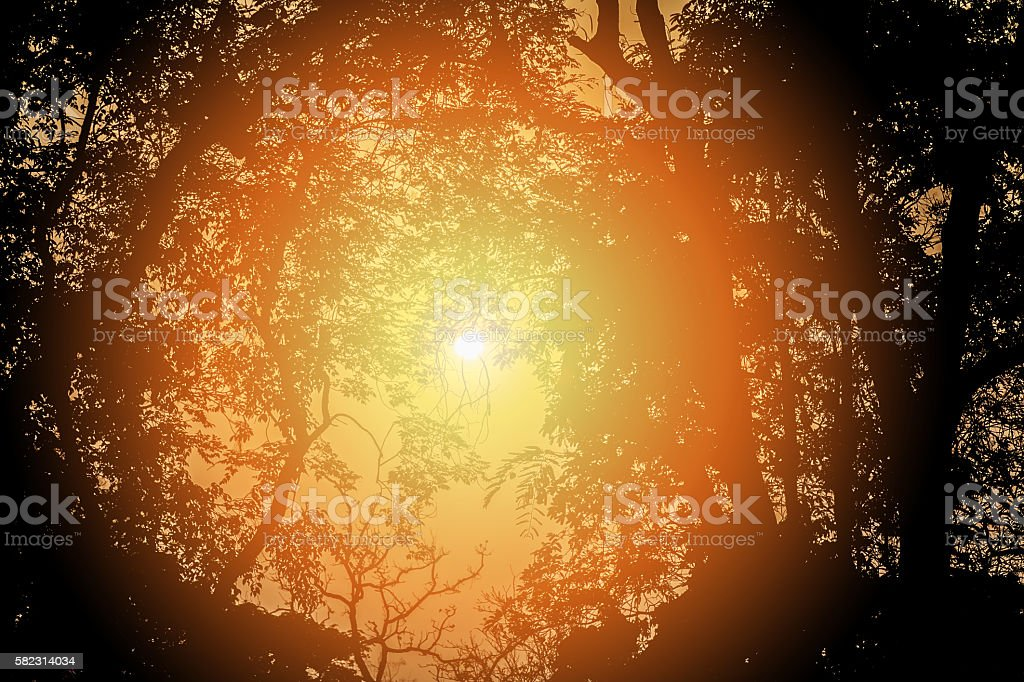 Sun shines through trees. Tree silhuoetted with sunlight stock photo
