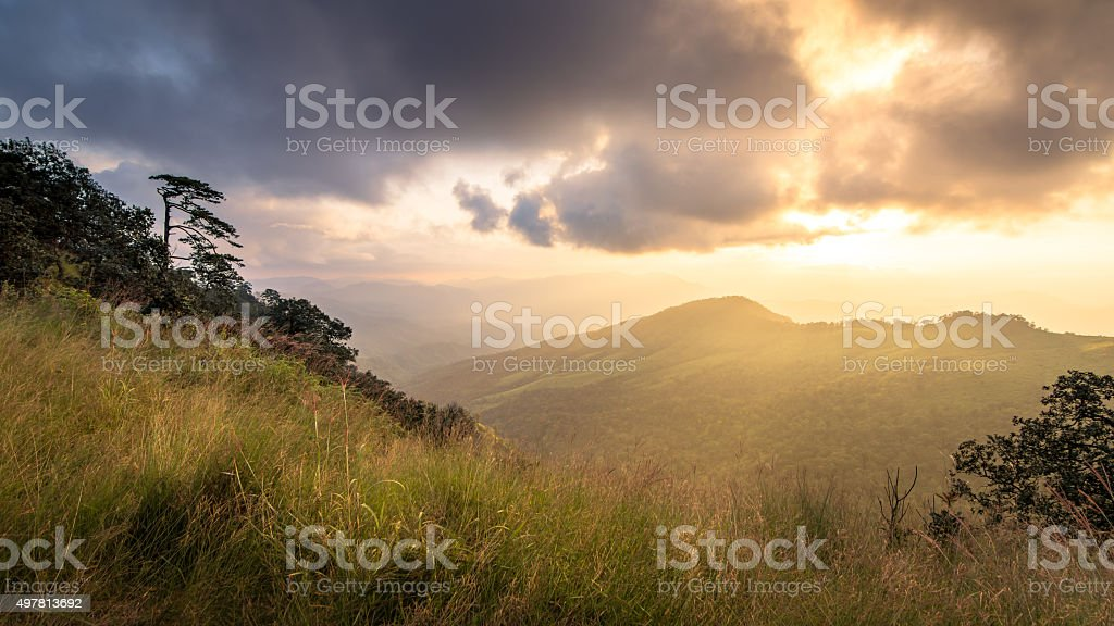 sun shining on grasses. rim-light stock photo