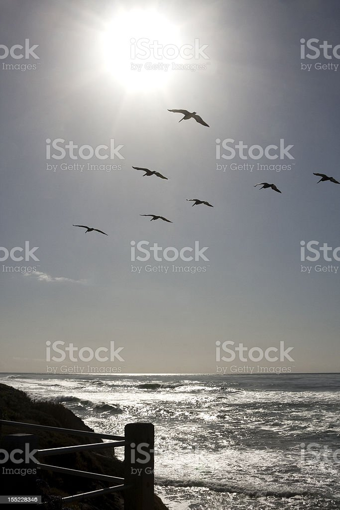 Sun Shining on Pacific Ocean with Seagulls royalty-free stock photo