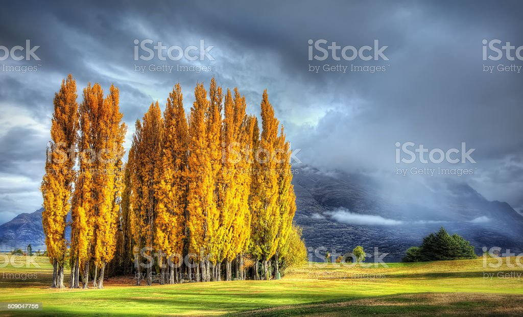Sun shining on poplar trees on a cloudy day stock photo