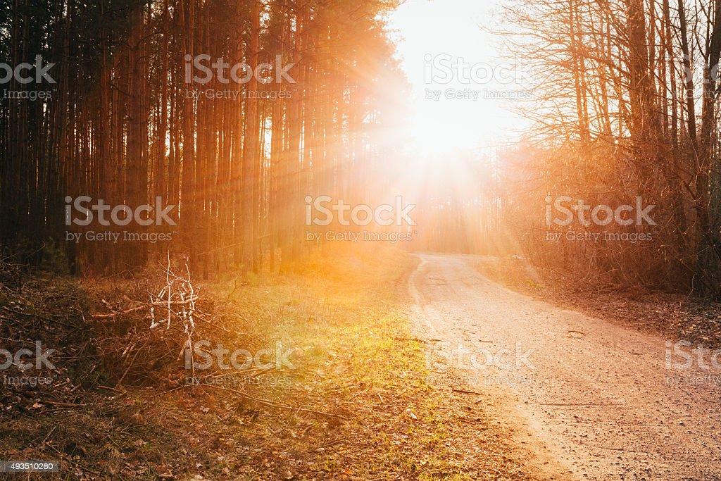 Sun shining over road, path, walkway through forest. Sunset Sunr stock photo
