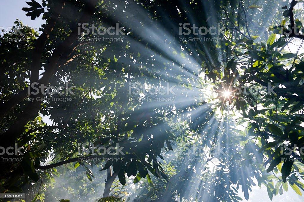 Sun shining through misty trees. stock photo